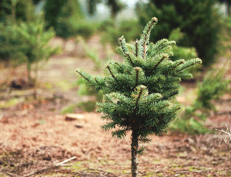 brand new christmas tree.jpg