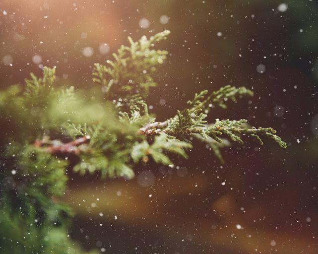 christmas-tree-recycling.jpg