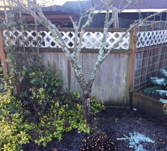 clean up under fruit trees2.jpg