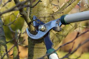 pruning-feb.jpg