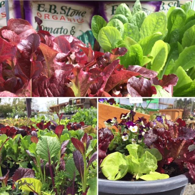 veggie collage.jpg