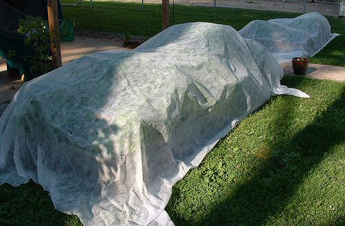 row-covers-protecting-plants-from-frost.jpg