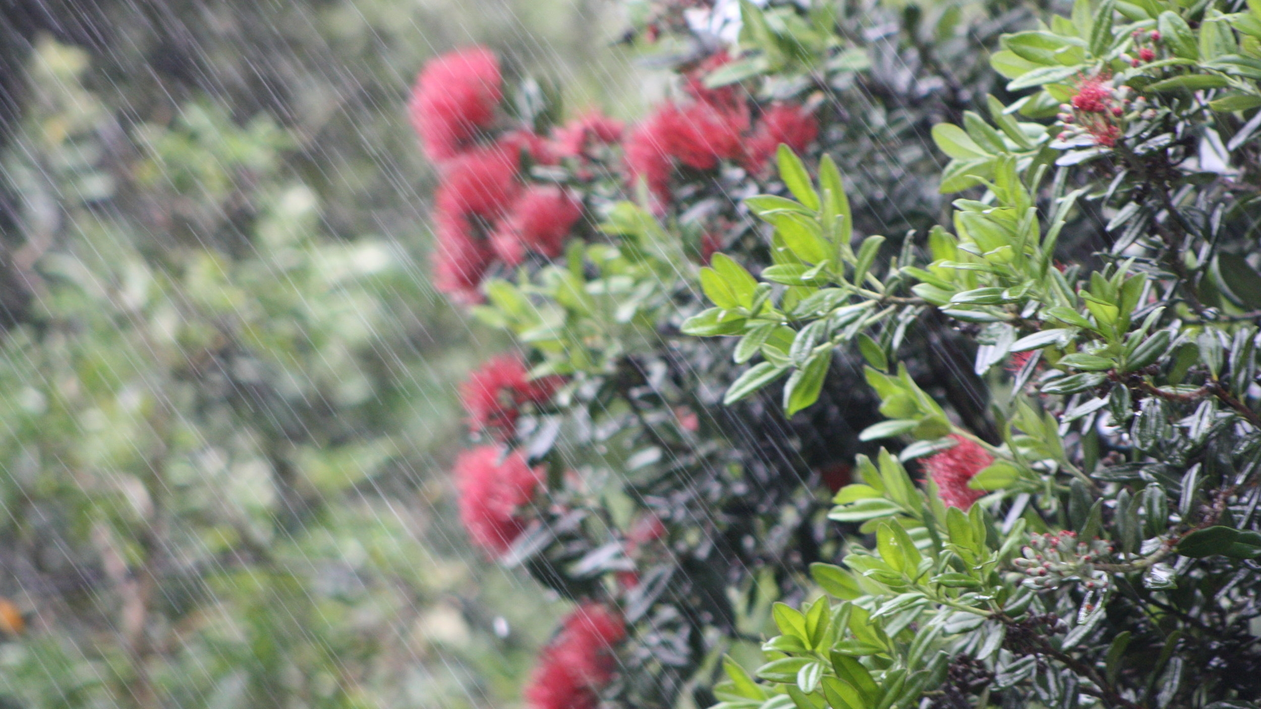 rain in the garden.jpg