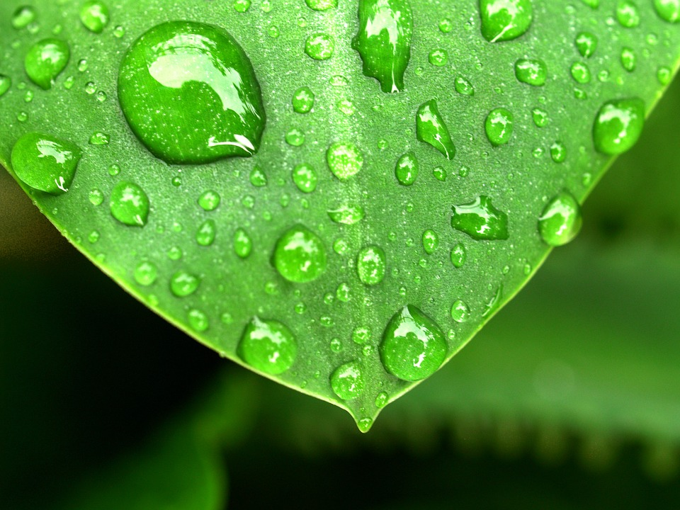 water on leaf.jpg