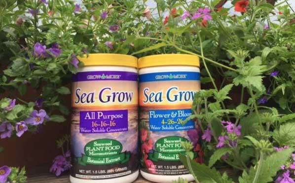 Seagrow.jpg