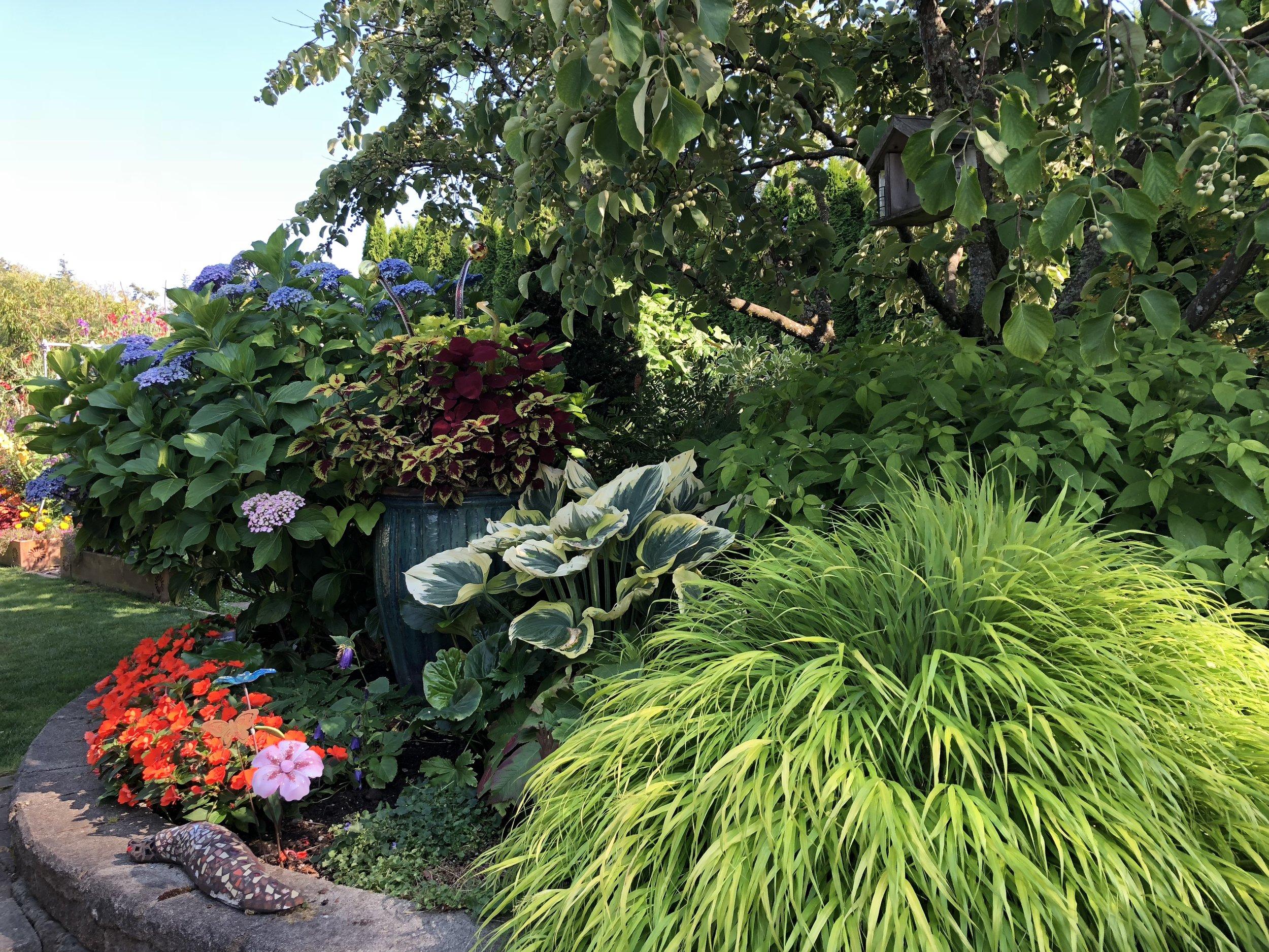 Steve's garden.JPG