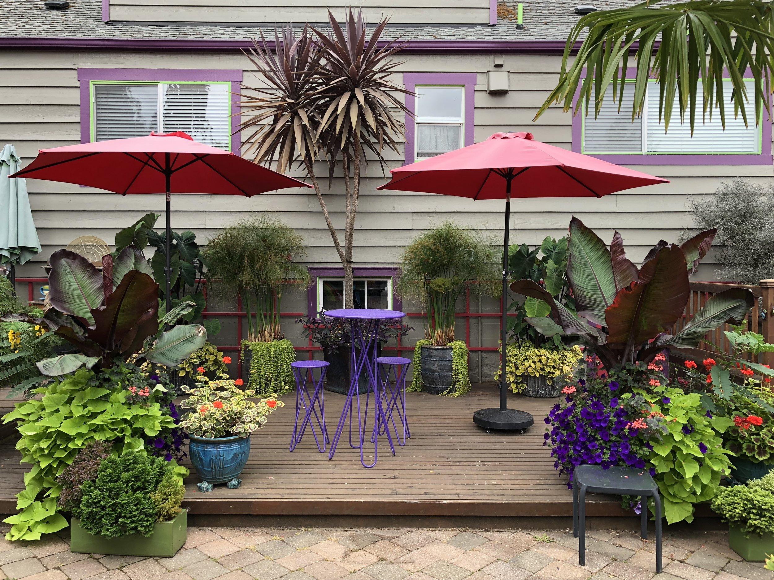 Steve's tropical patio.JPG
