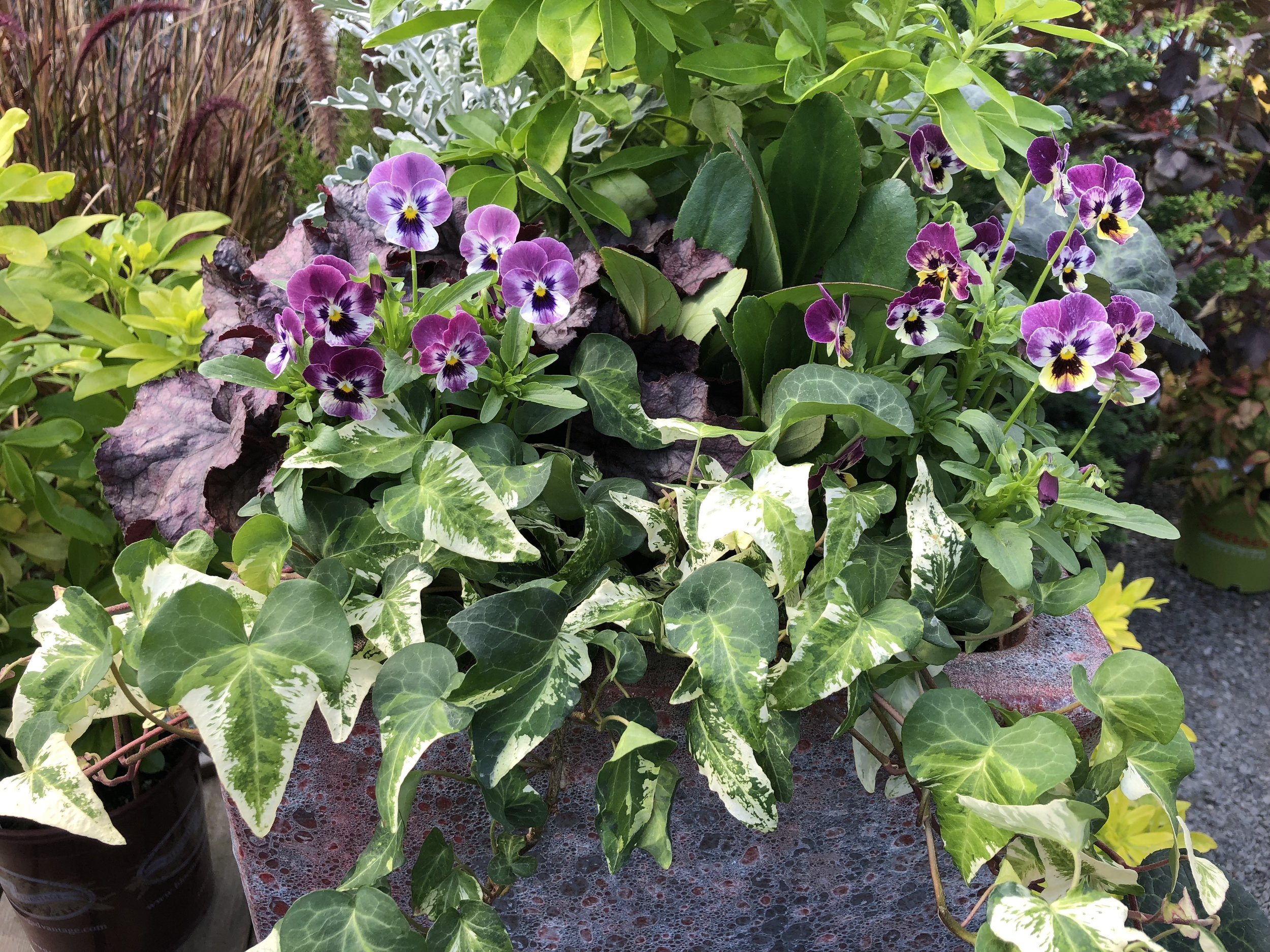 pansies in container.JPG