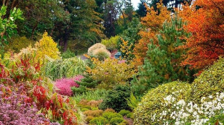 fall shrub garden.jpg
