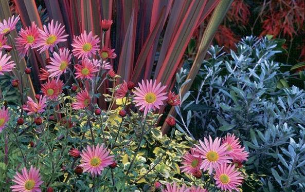 fall pnw garden2.jpg
