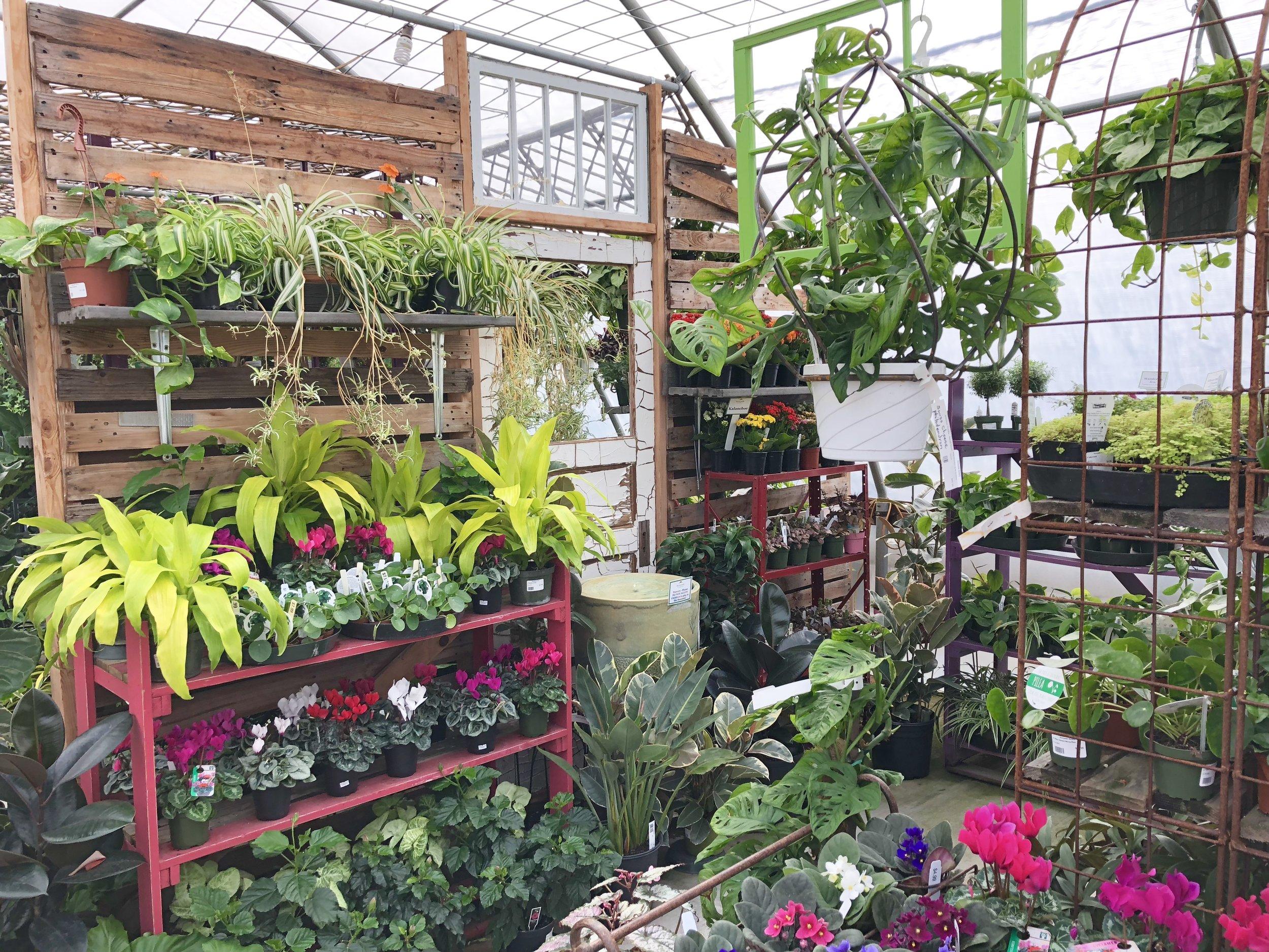 medium light houseplant section.JPG