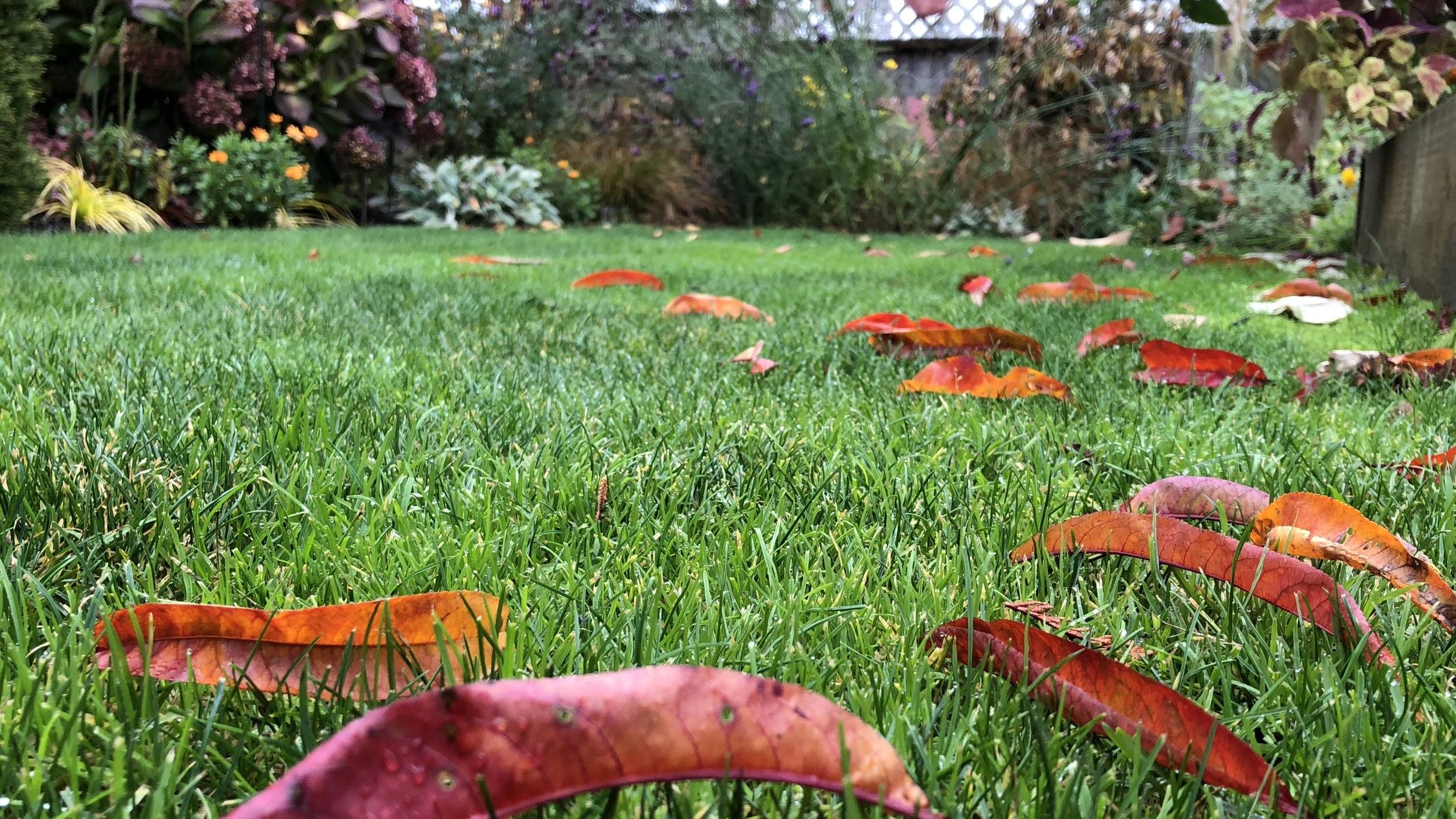 Steve's yard in fall.JPG