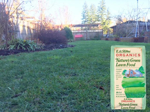 Steve yard in winter with eb lawn food.jpg