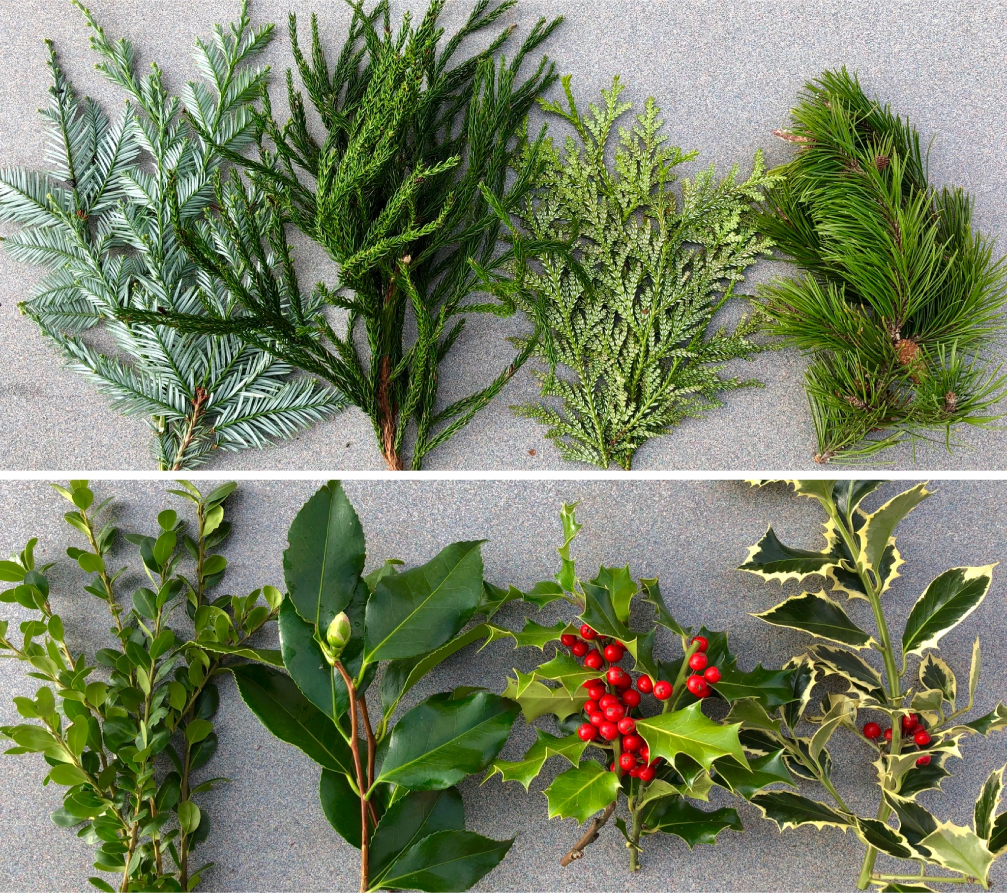 evergreen & broadleaf wreath materials collage2 copy.JPG