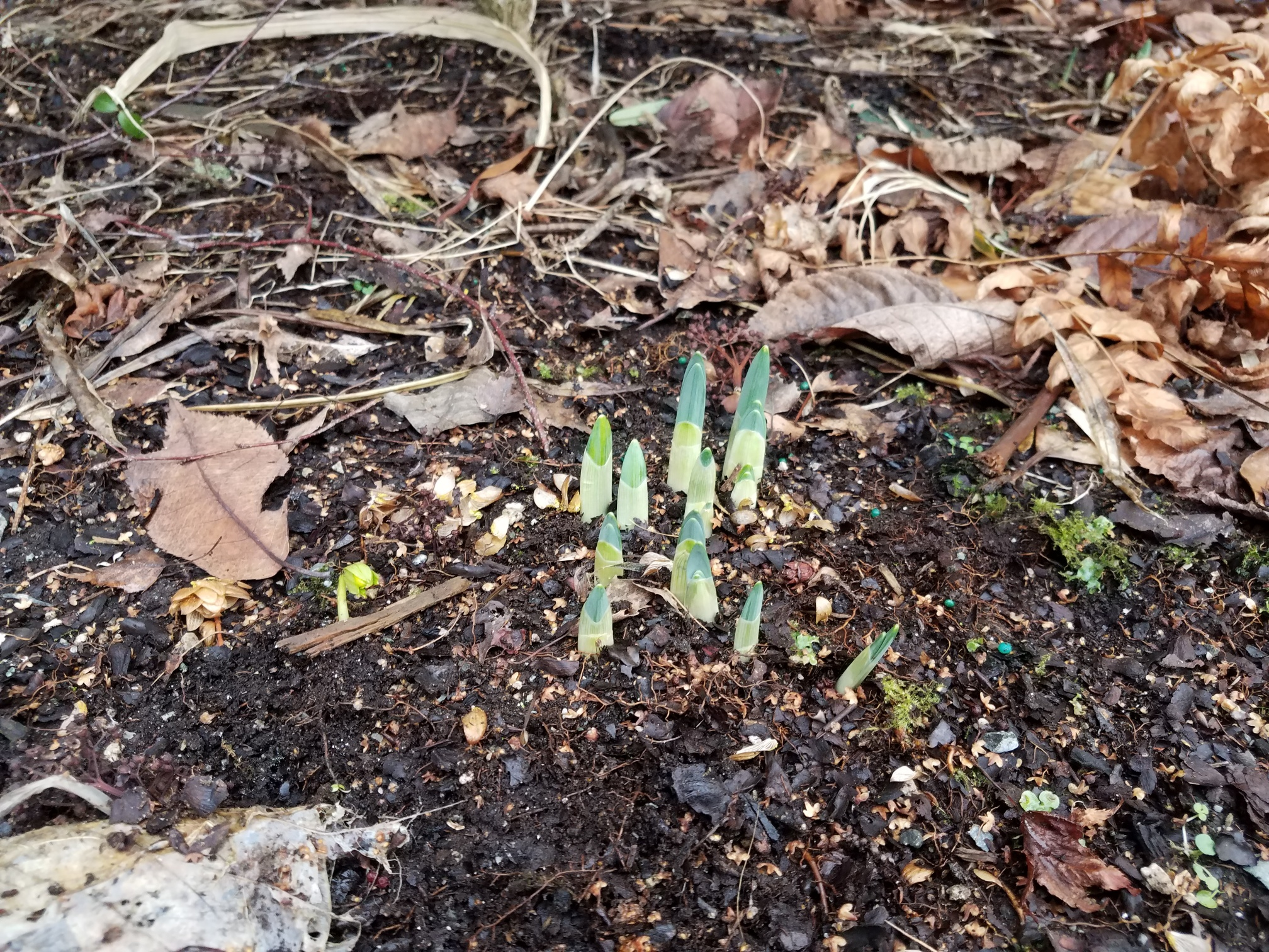 bulbs popping up.jpg