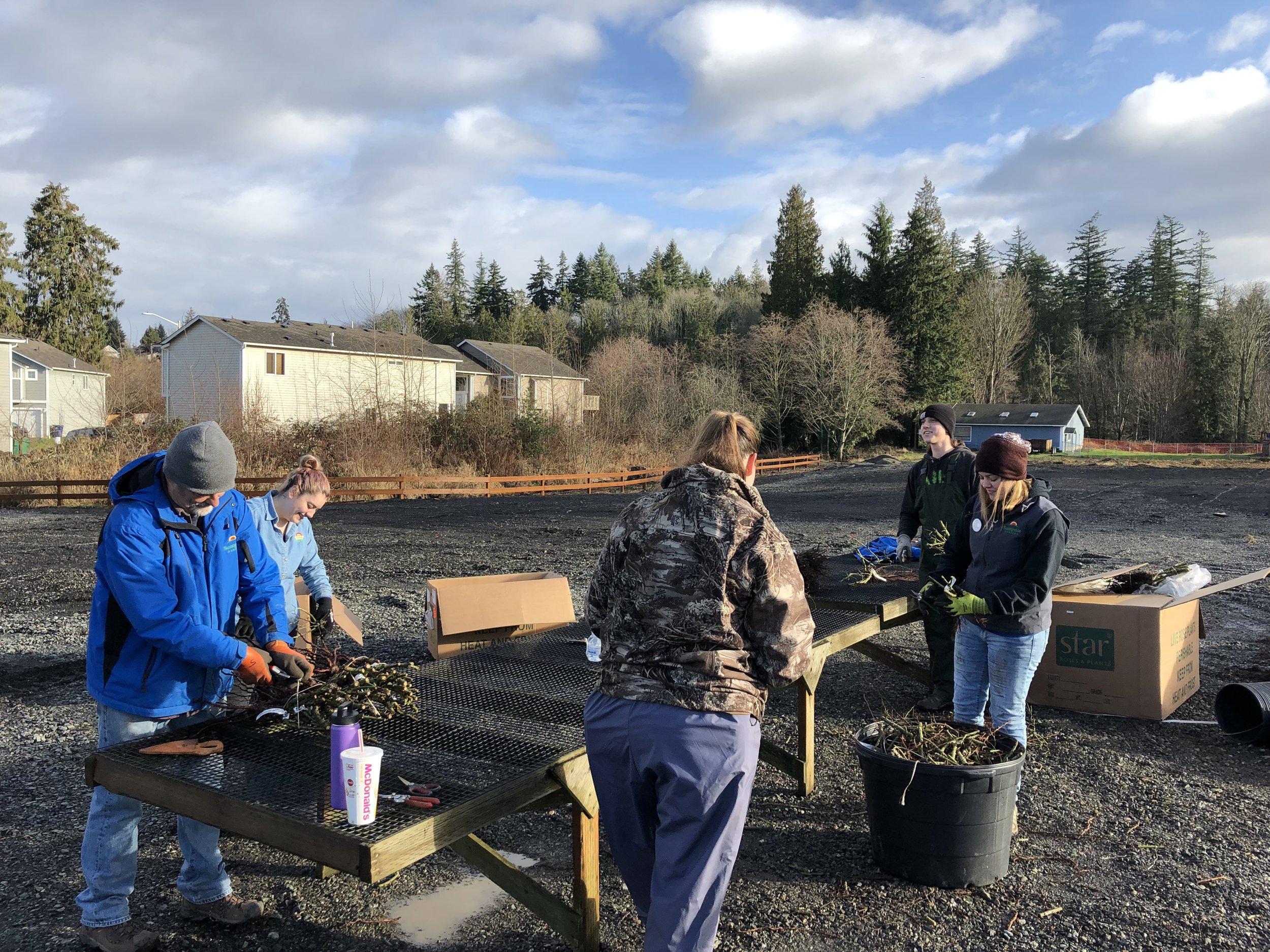 Rose crew pruning.JPG