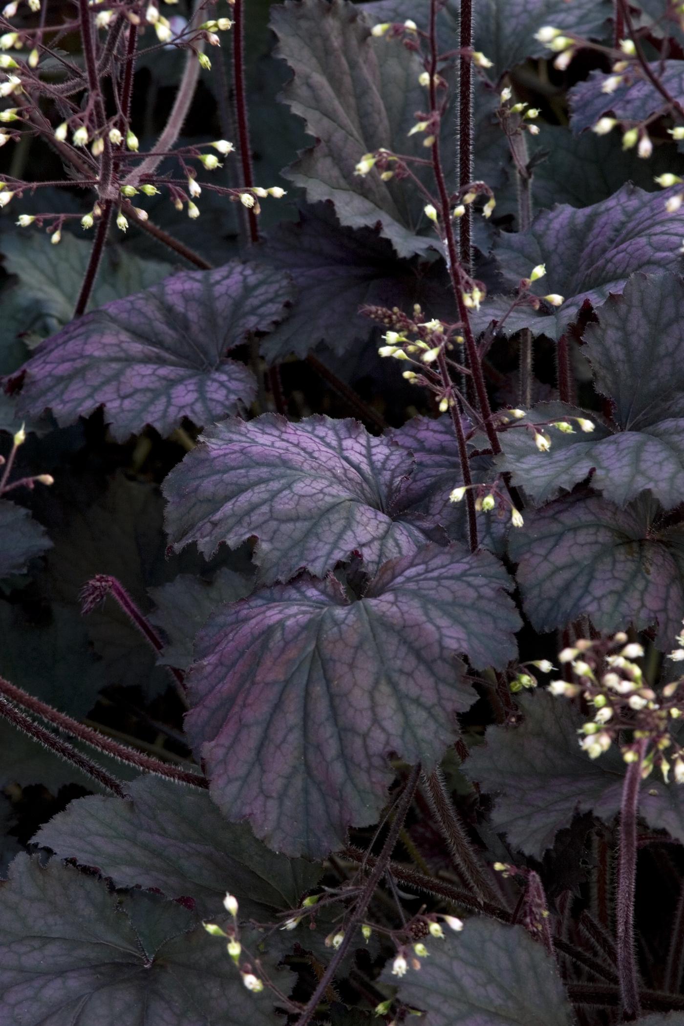 Frosted Violet.jpg
