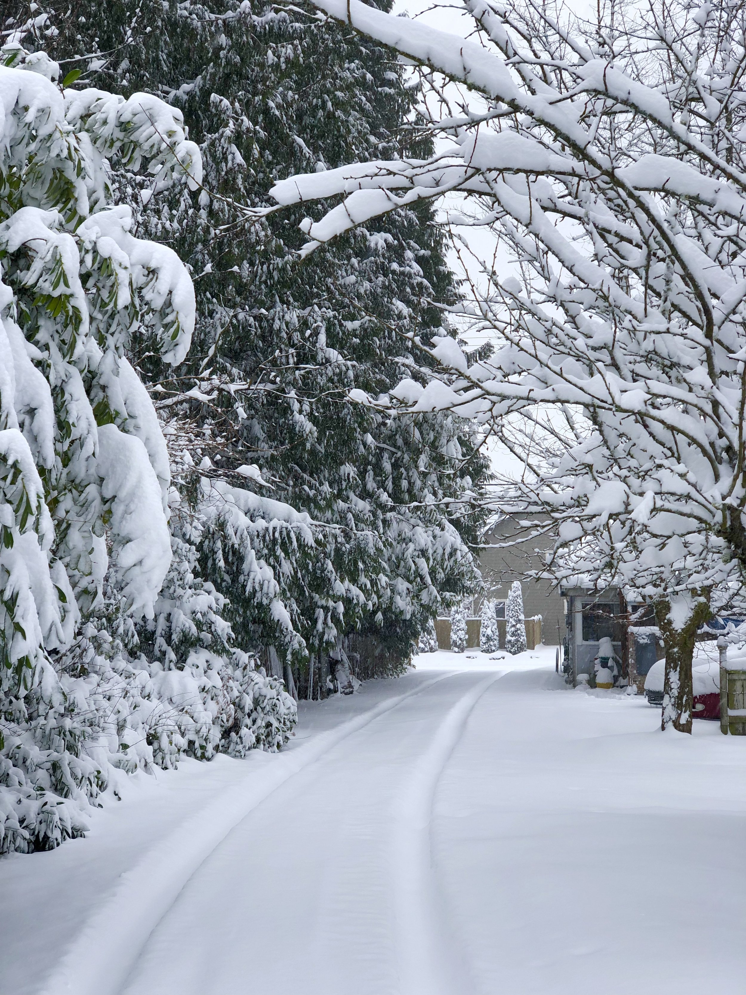 My driveway in snow.jpg