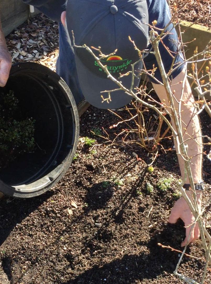 Steve weeding veg beds.jpg