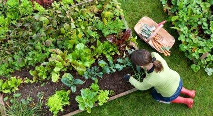 organic-vegetable-garden.jpg