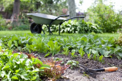 Spring veg gardening.jpg