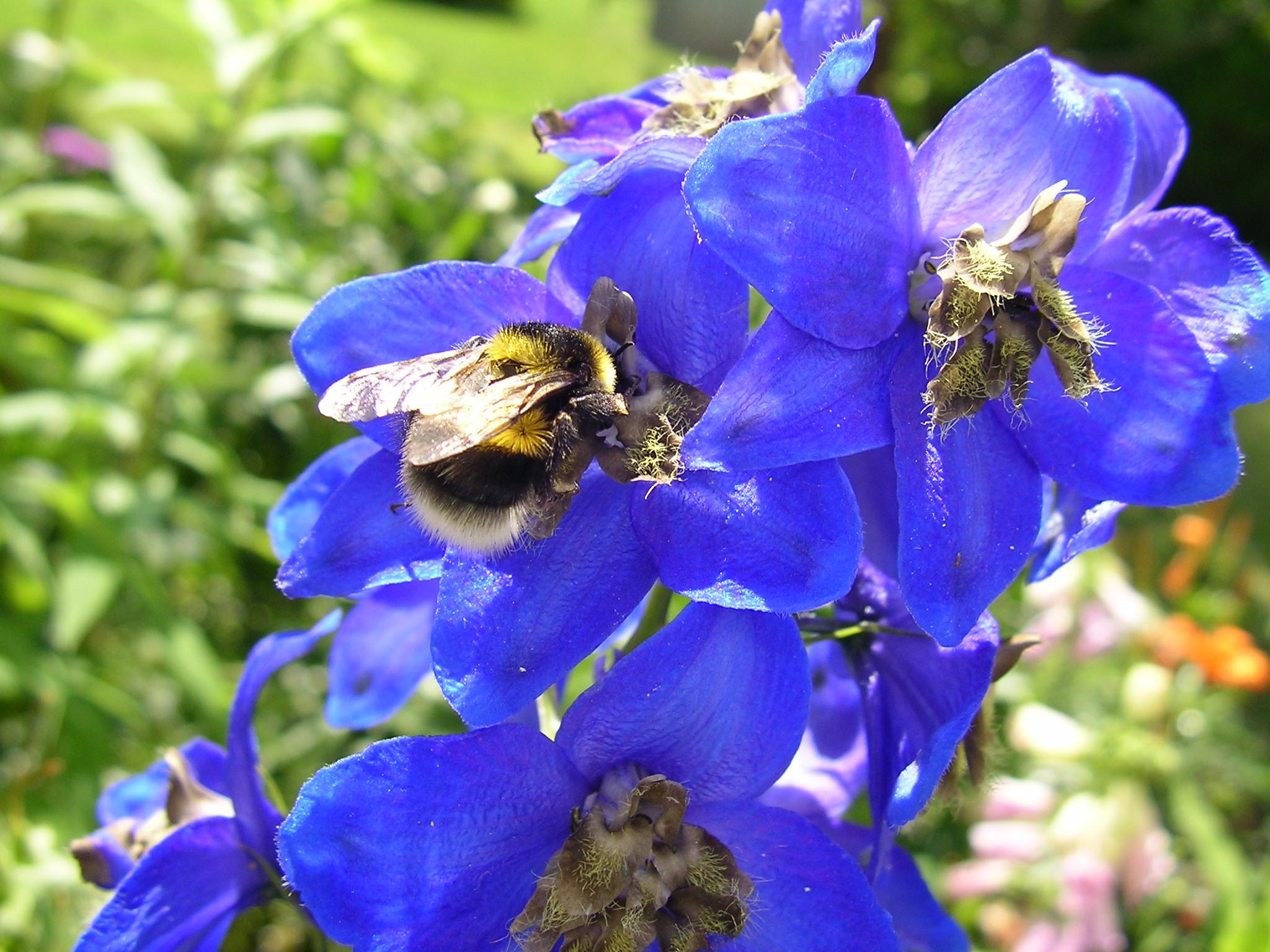 delphinium with bee.jpg