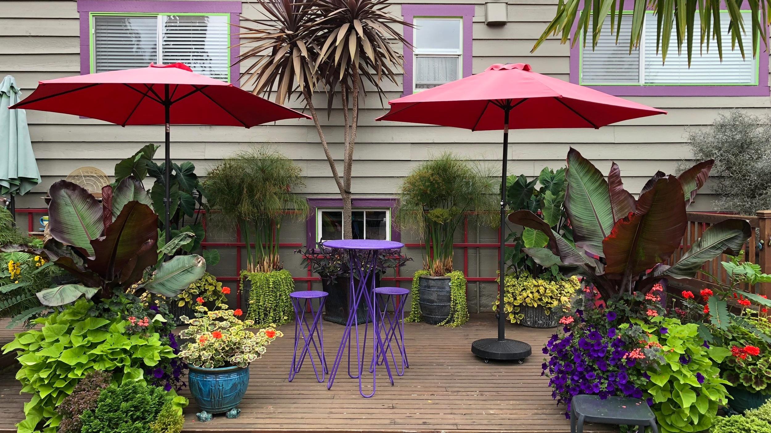 Steve%27s+tropical+patio+copy.jpg