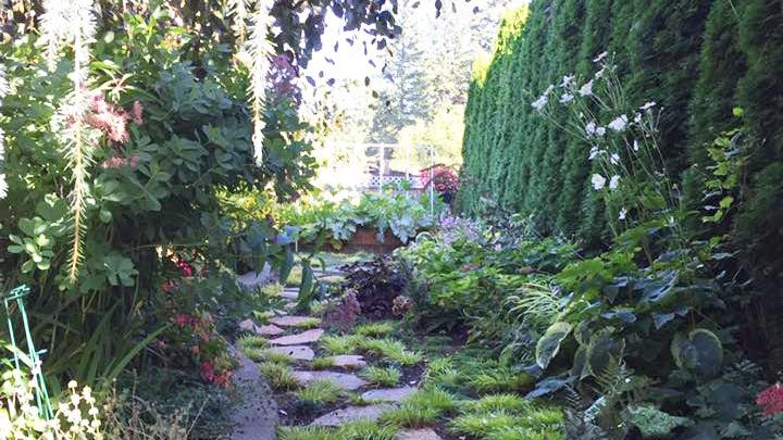 Steve%27s+shade+garden.jpg