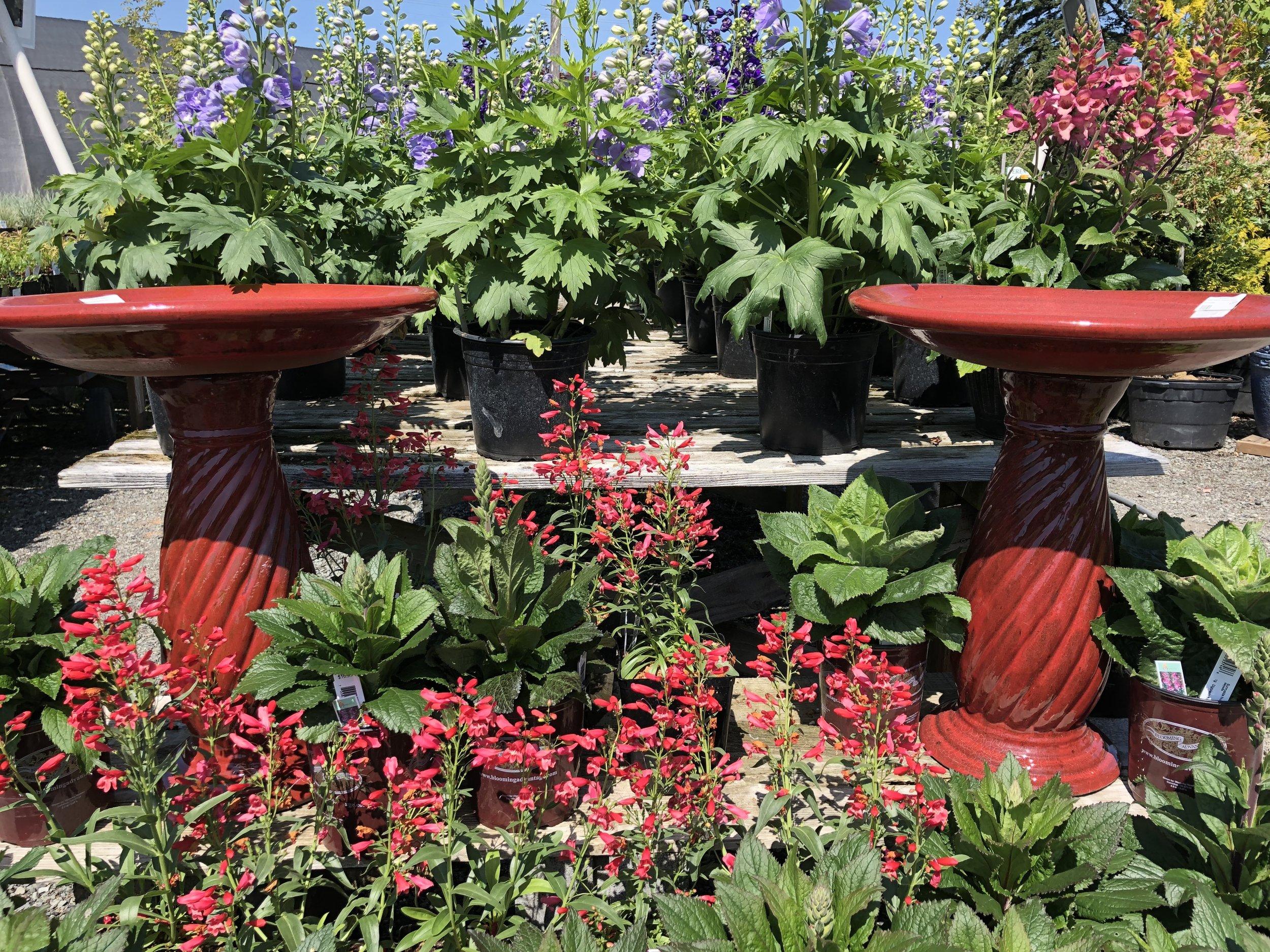 Greta ceramic red birdbath.JPG