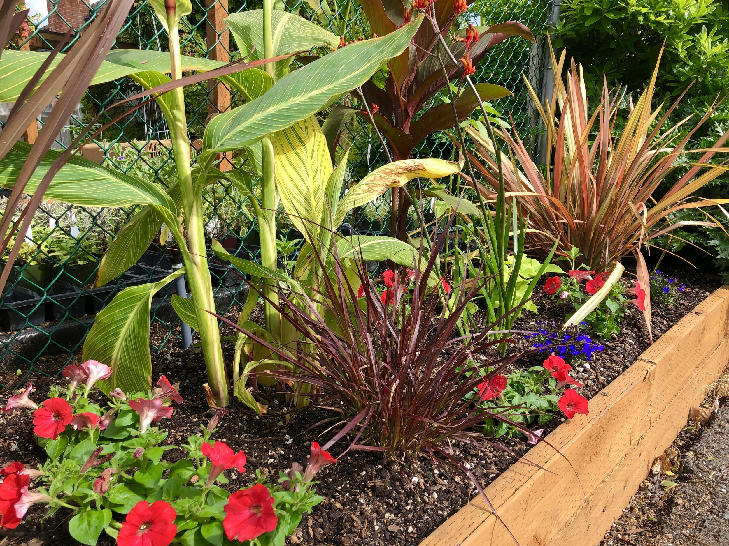 Front tropical border-1.jpg