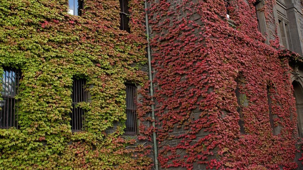 Boston+Ivy.jpg