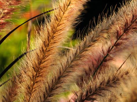 Grass close up.jpg