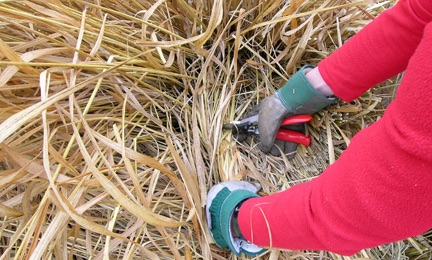 pruning grass.jpg