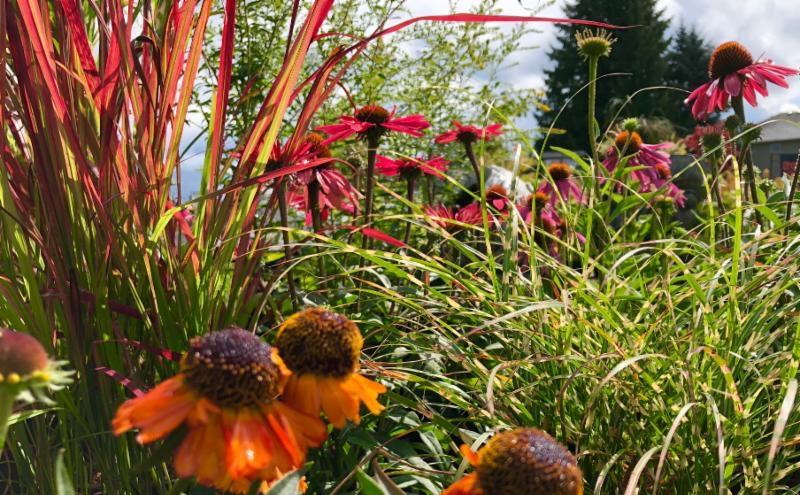 perennials _ grasses.JPG