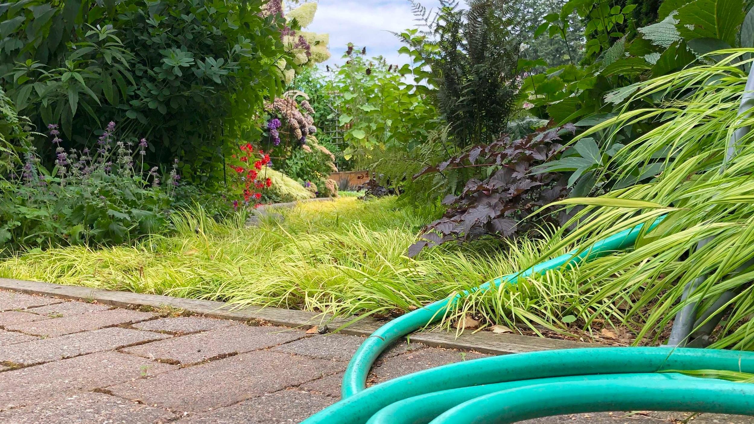 Chores+in+Steve%27s+garden2.jpg
