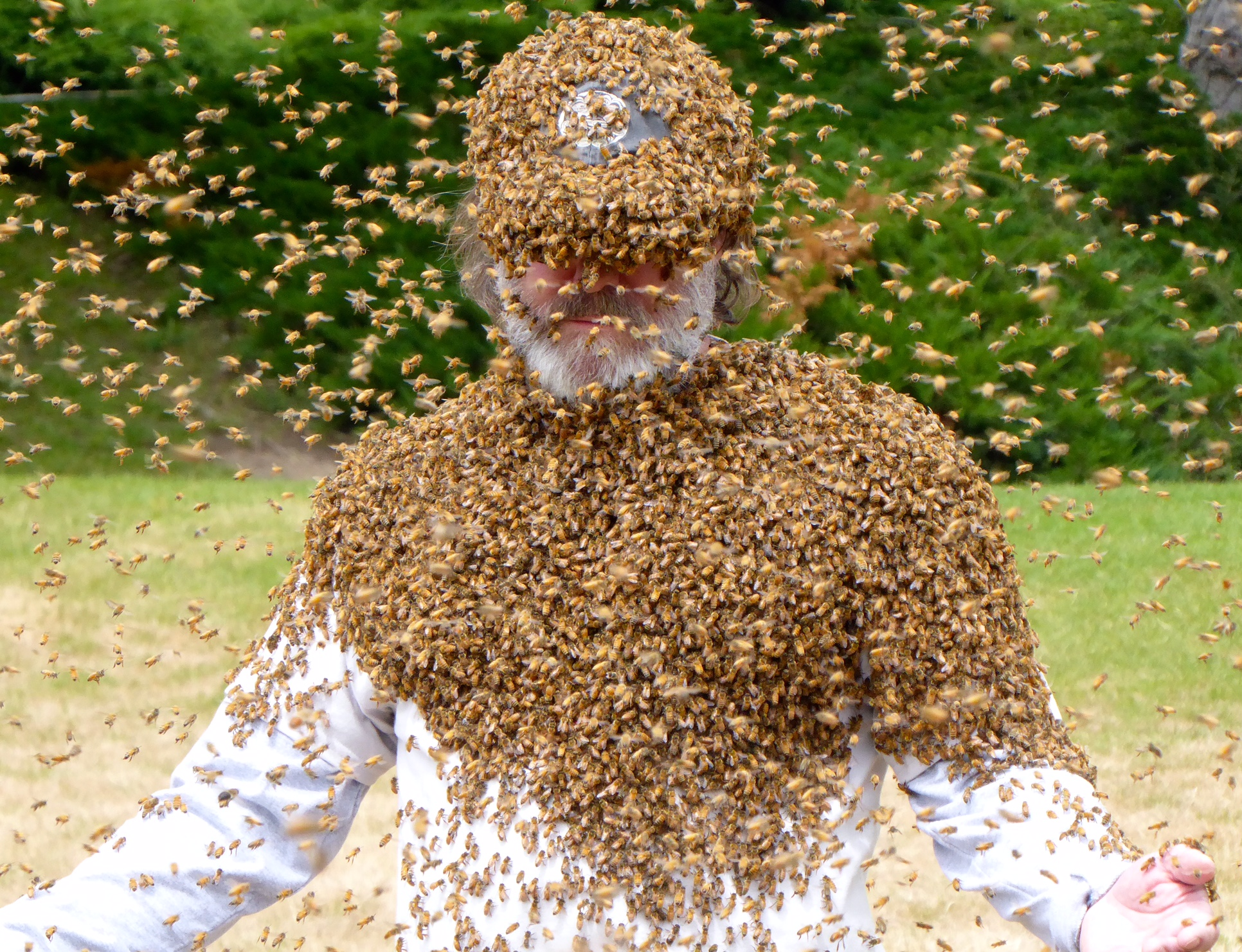 Paul Stamets fully engulfed with bees june 17 2016.JPG