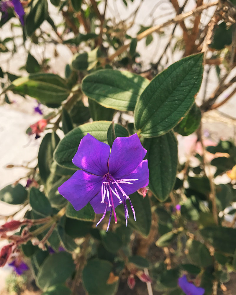 flower-purple.jpg