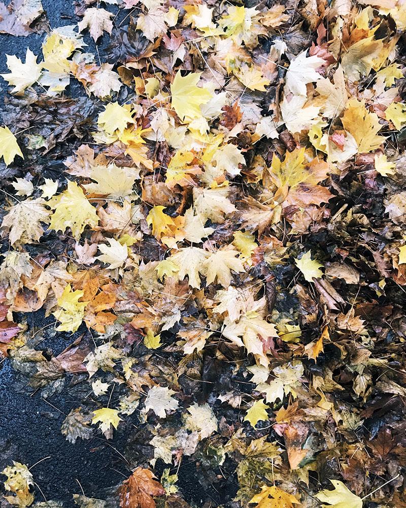 sat-leaves.jpg