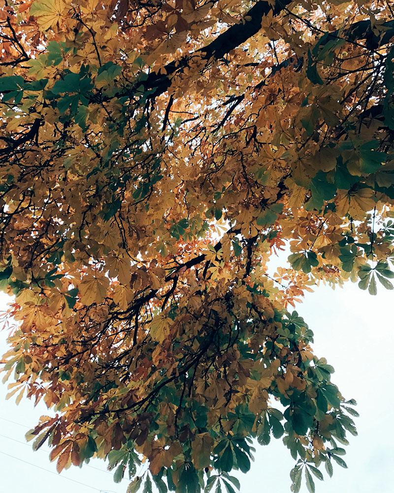 sun-foliage-06.jpg