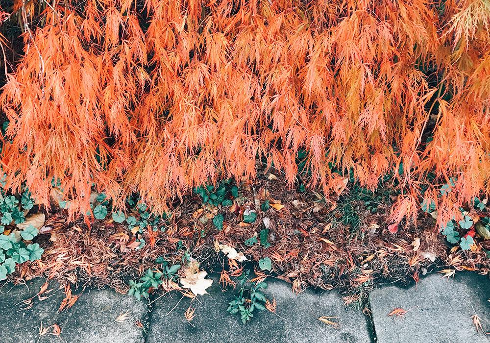 sun-foliage-05.jpg