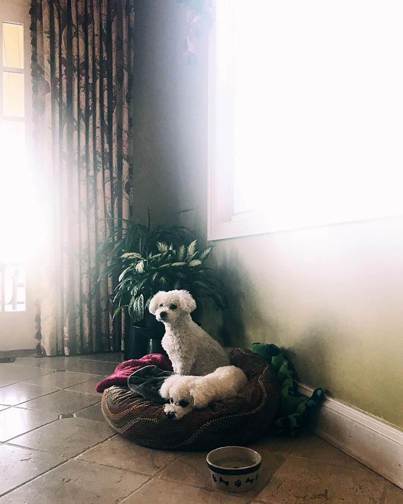 pups-bed.jpg