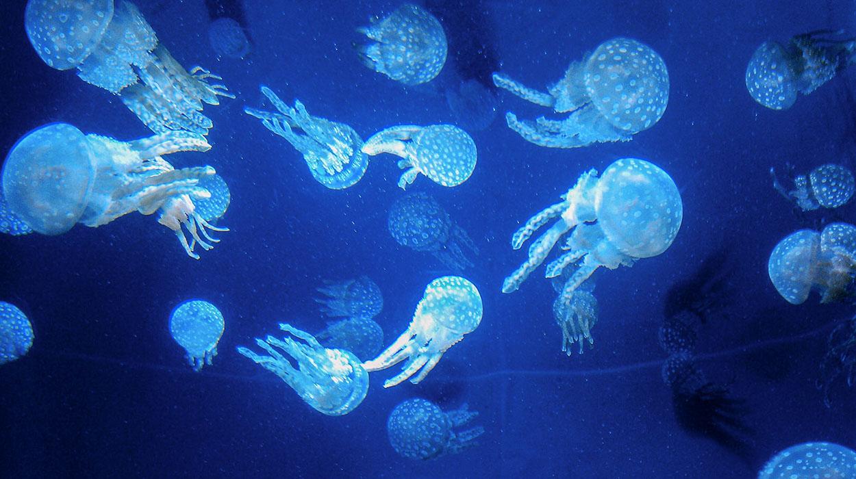 churaumi-jellyfish-02.jpg