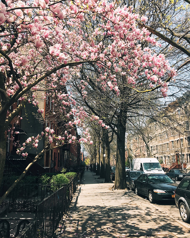 sat-magnolias-01.jpg