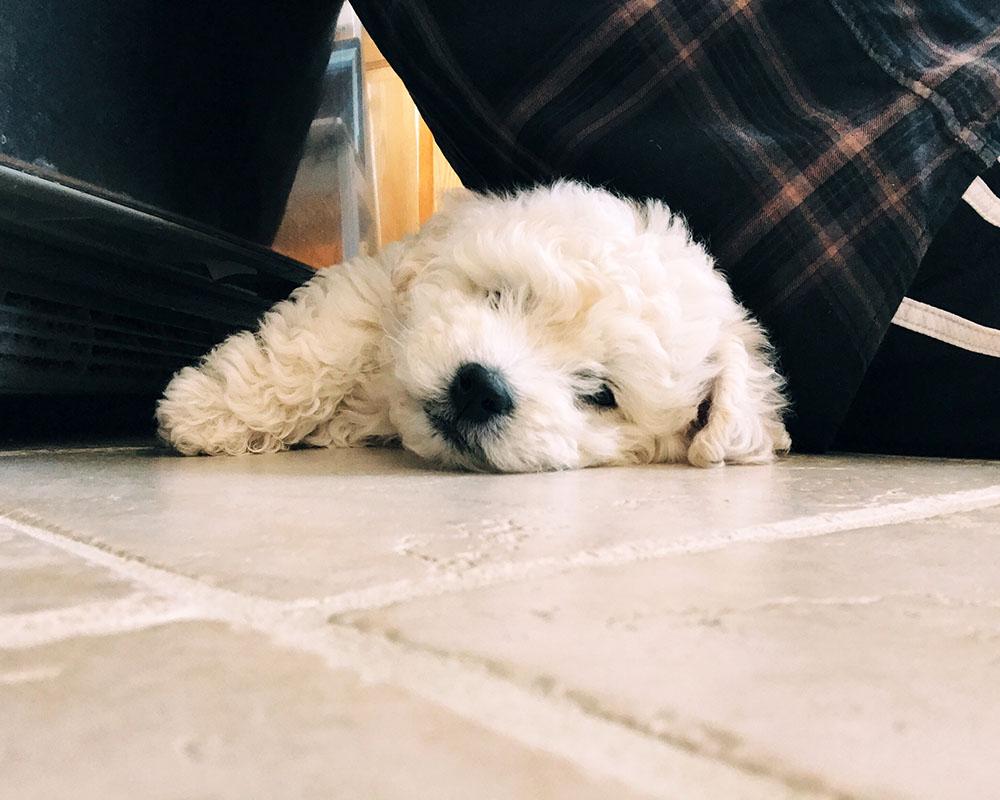 puppy-floor.jpg