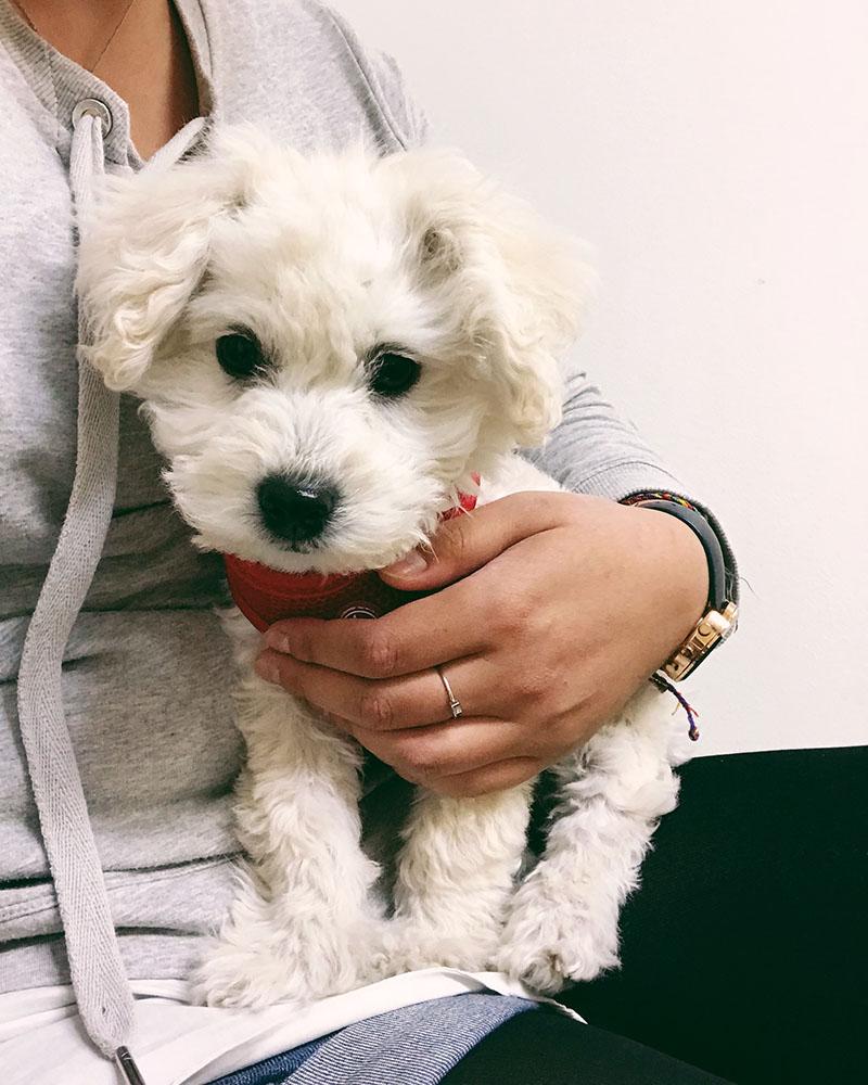 puppy-vet-03.jpg