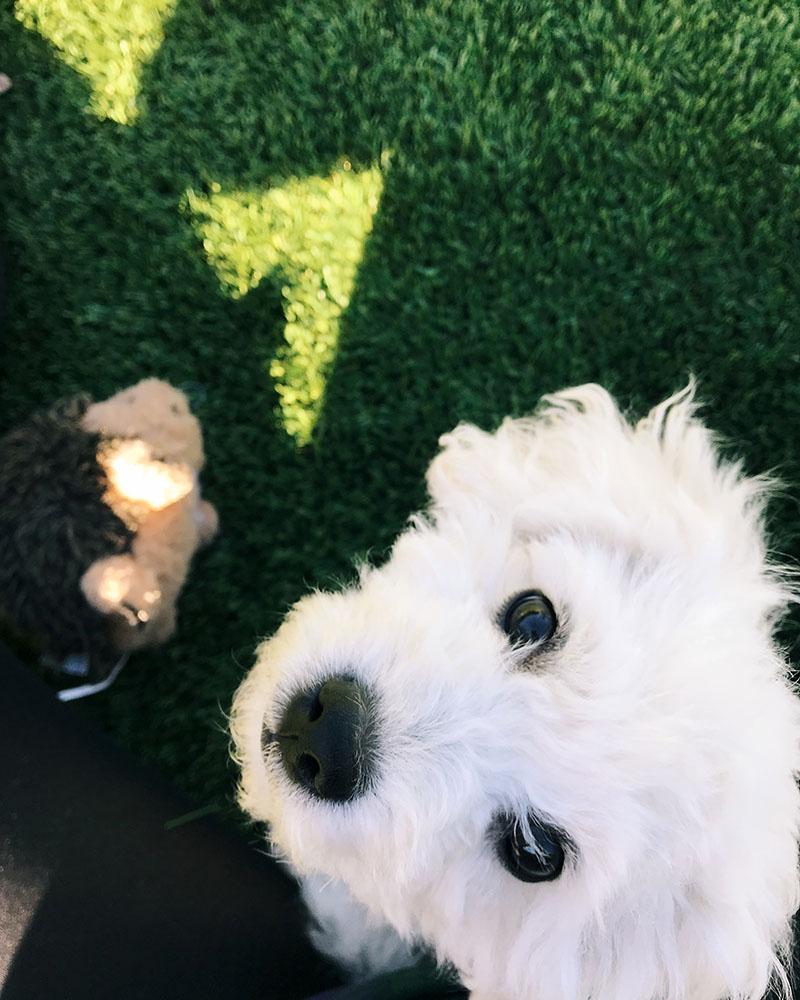 puppy-face.jpg