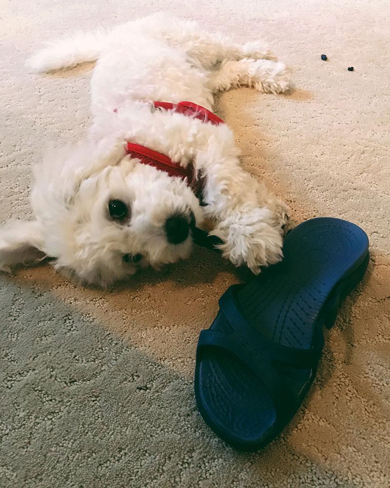 puppy-shoe.jpg