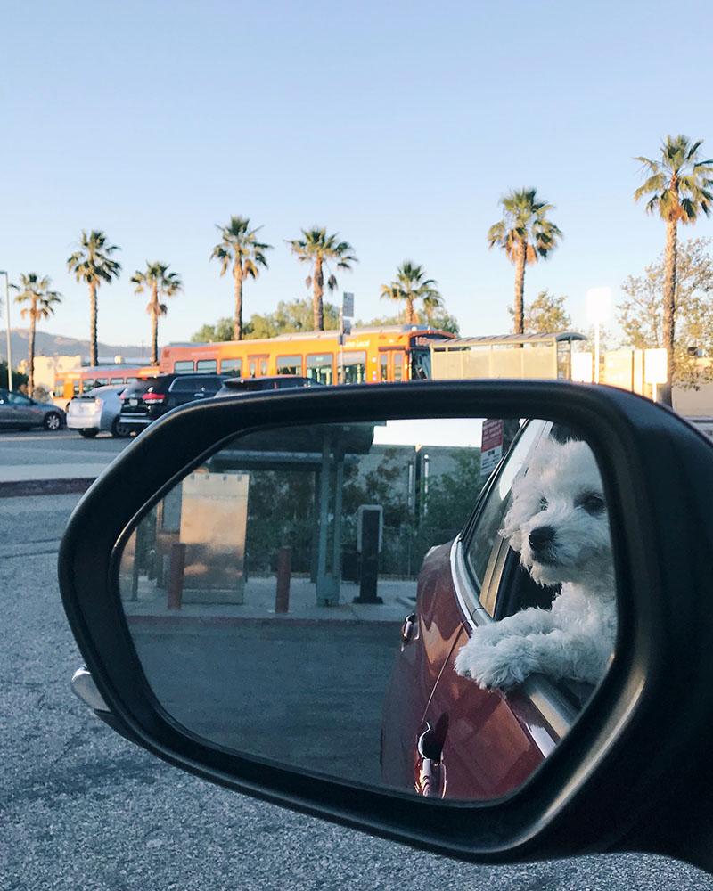 puppy-car.jpg