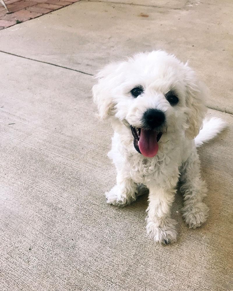 puppy-smile-02.jpg