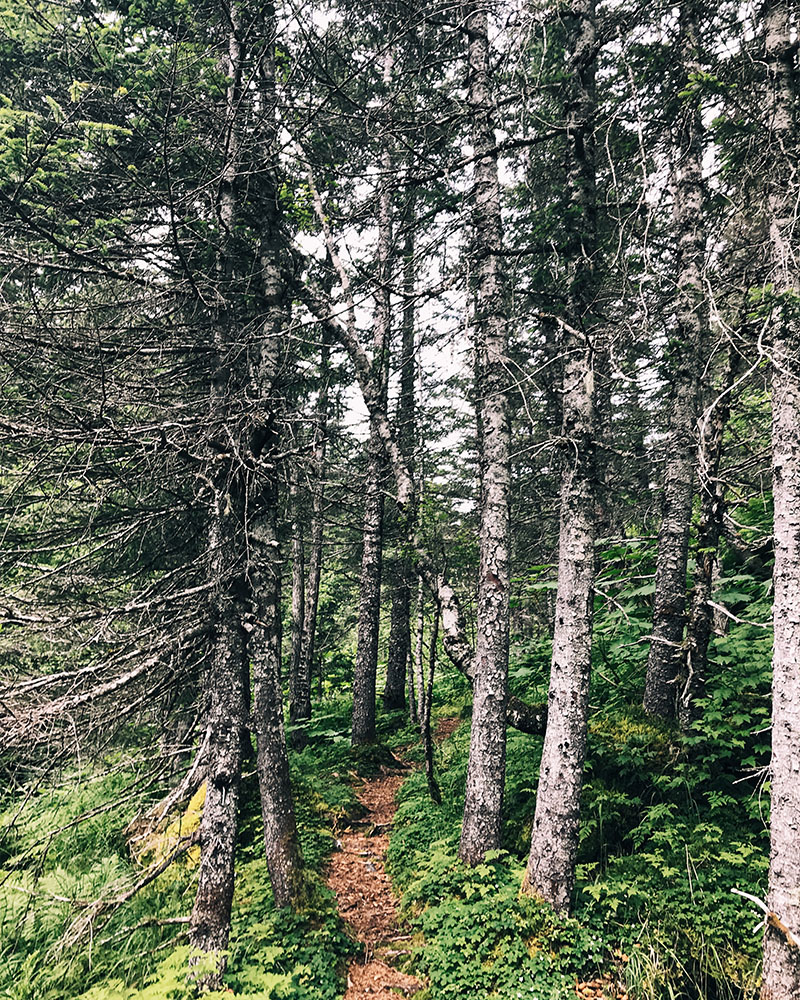 180716-hikingtrail.jpg